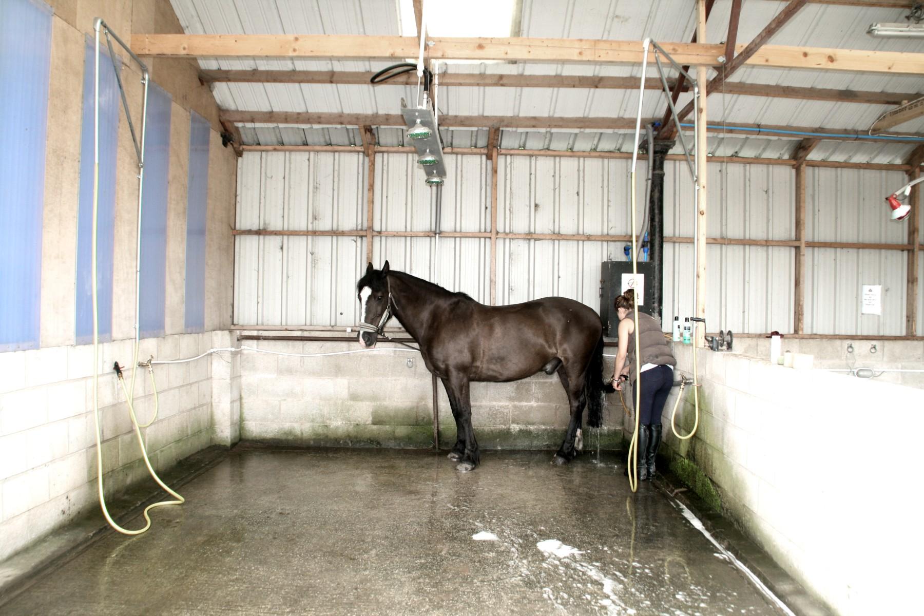 Horse_shower