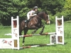 Express eventing jumps.jpg