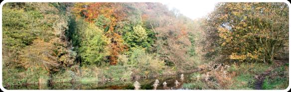 river Goyt scenery