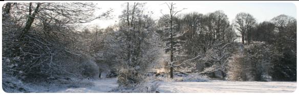 Peak District Wintery Forest
