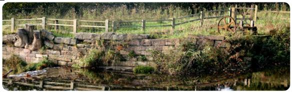 Riverbank on Goyt