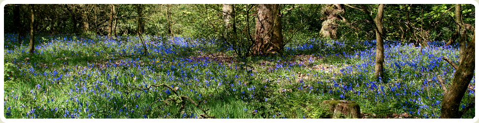 Forest with Blue Flowers
