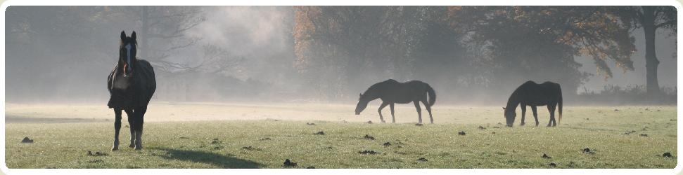 Horses in Misty Field