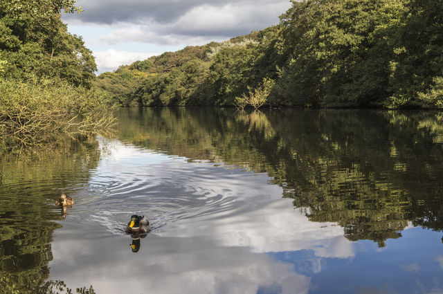 Etherow Country Park and duck. Image by ArrowSG (via Shutterstock).